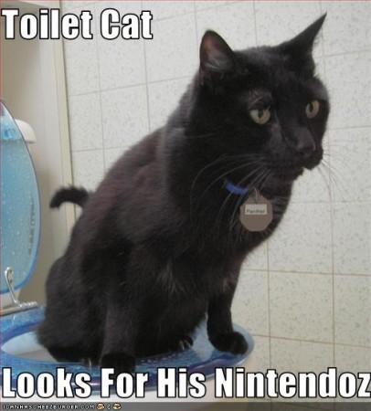 toiletcat